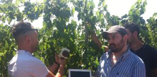 Innovazione in vigna in Maremma, il futuro dell'enocultura