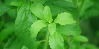 Stevia, dolcificante naturale quali controindicazioni